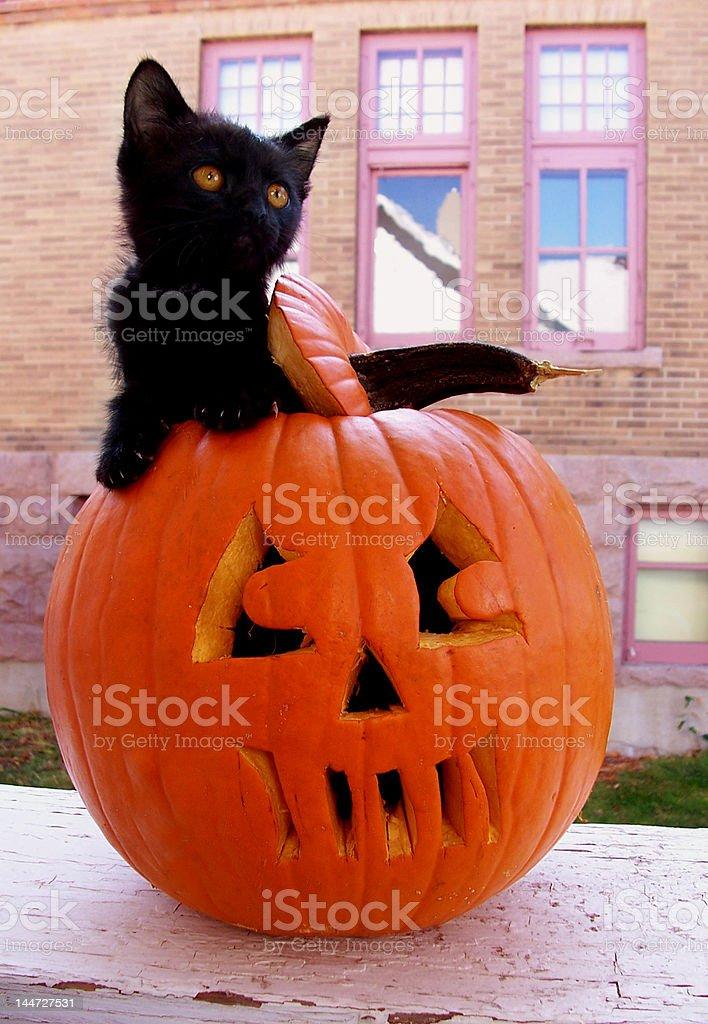 Black Kitten in Pumpkin stock photo