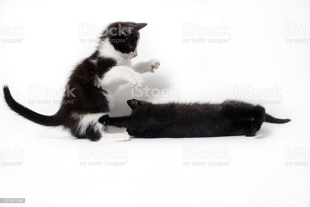 black kitten isolated on white background royalty-free stock photo