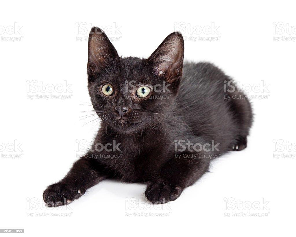 Black Kitten Lying Down on White stock photo