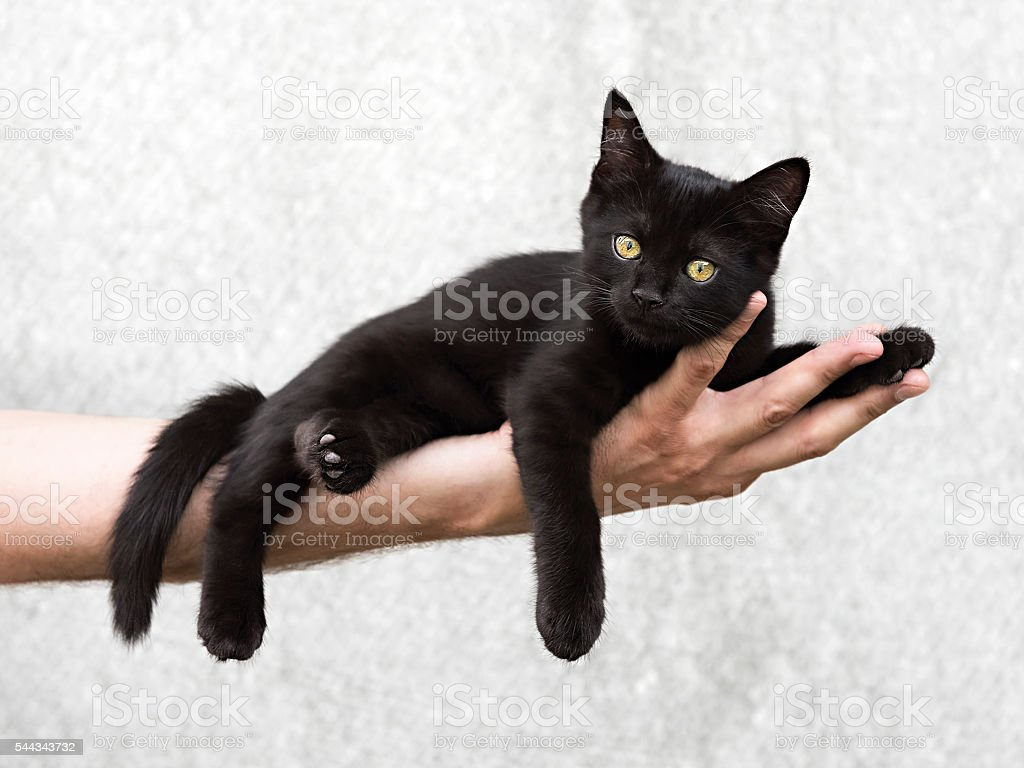 Black kitten lying on a man's hand stock photo
