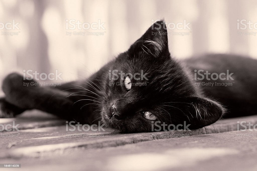 black kitten stock photo
