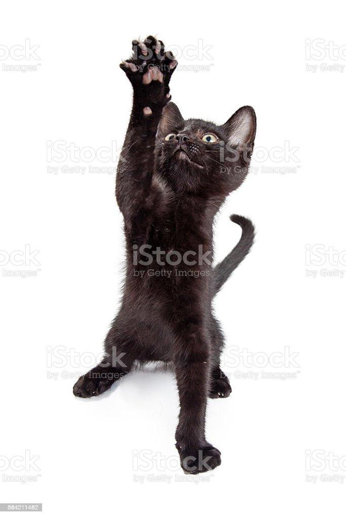 Black Kitten Reaching Paw Up stock photo