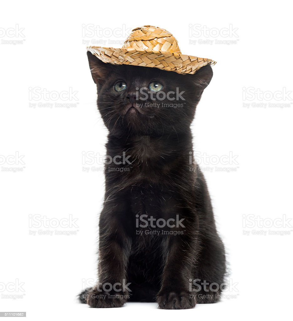 Black kitten wearing a straw hat stock photo