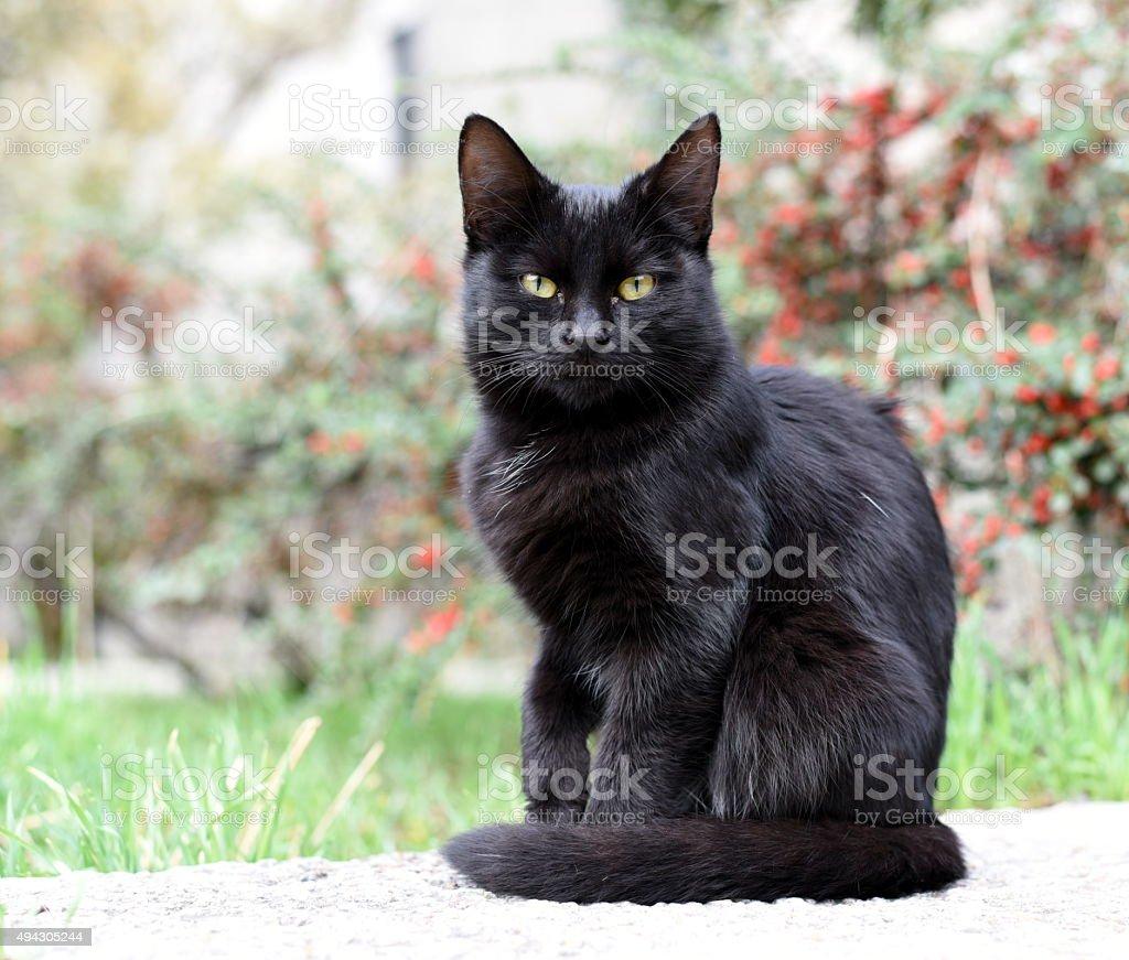 Black kitty on the street stock photo