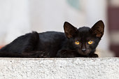 Black kitty with green eyes