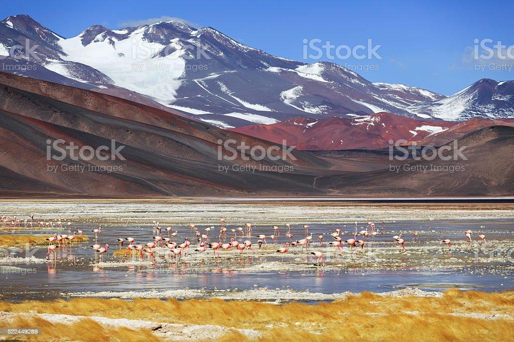 Black lagoon, volcano Pissis, Catamarca, Argentina stock photo