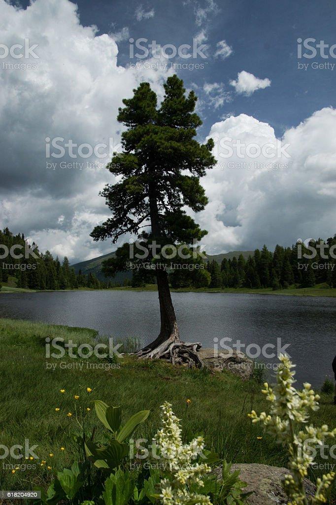 Black Lake, Carinthia, Austria stock photo