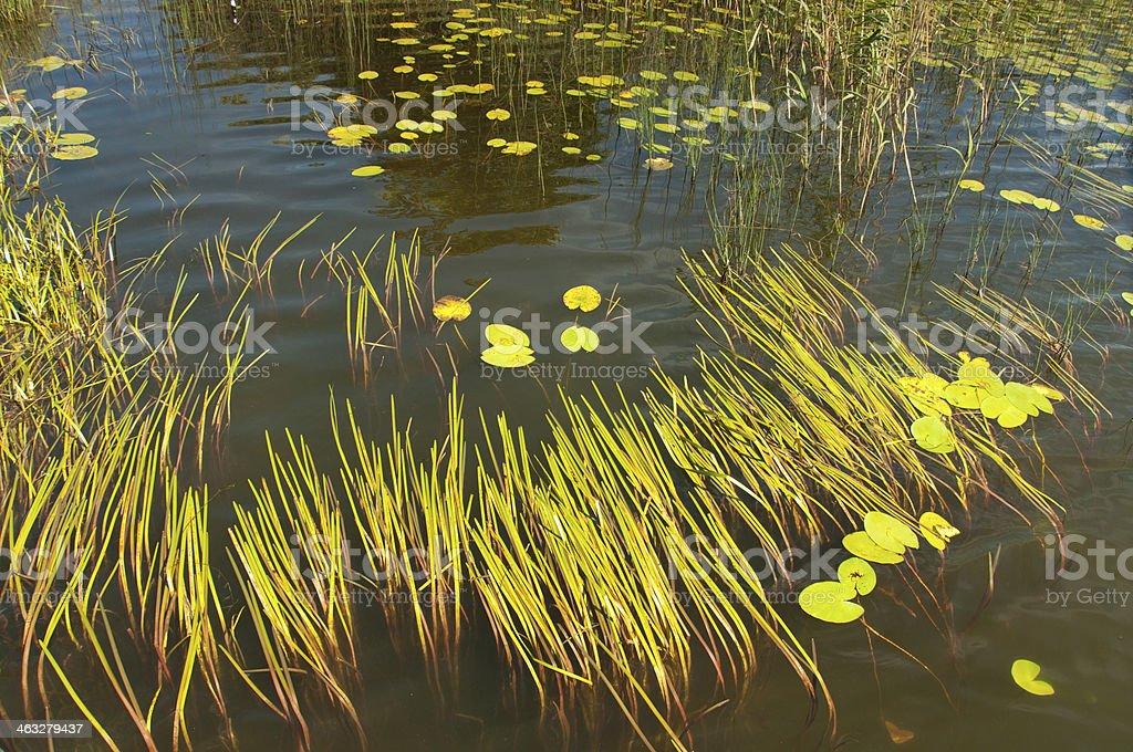 Black Lake in the Suwalki region Osinki stock photo