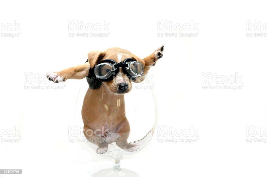 Black leather clad puppy stock photo