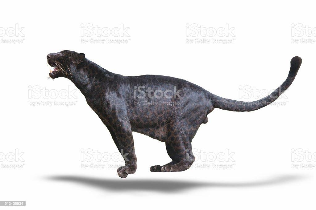Panthère noire photo libre de droits
