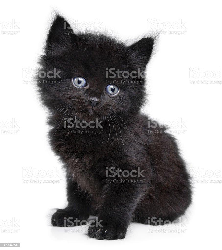 Black little kitten on a white background stock photo