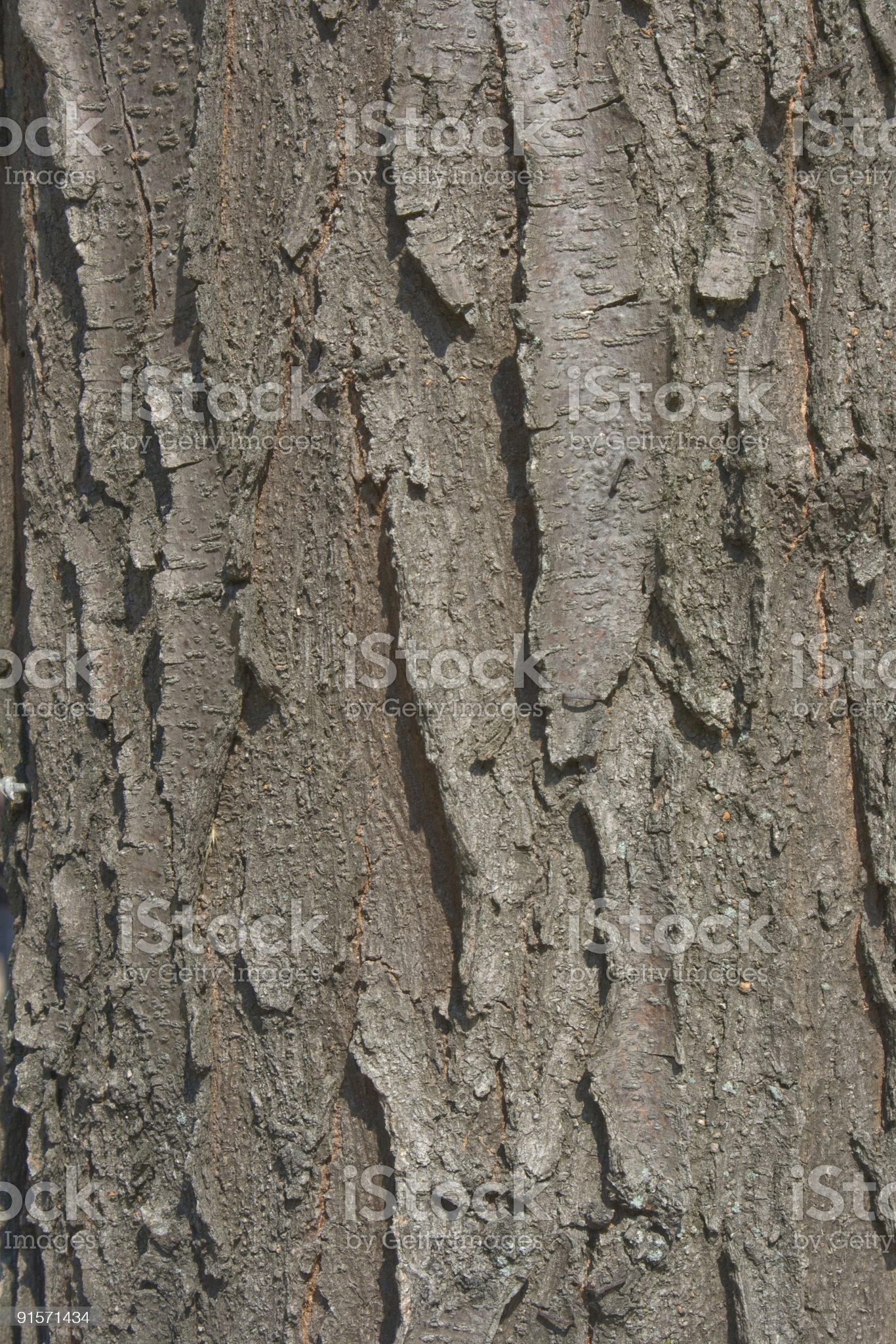 Black Locust Bark Background royalty-free stock photo