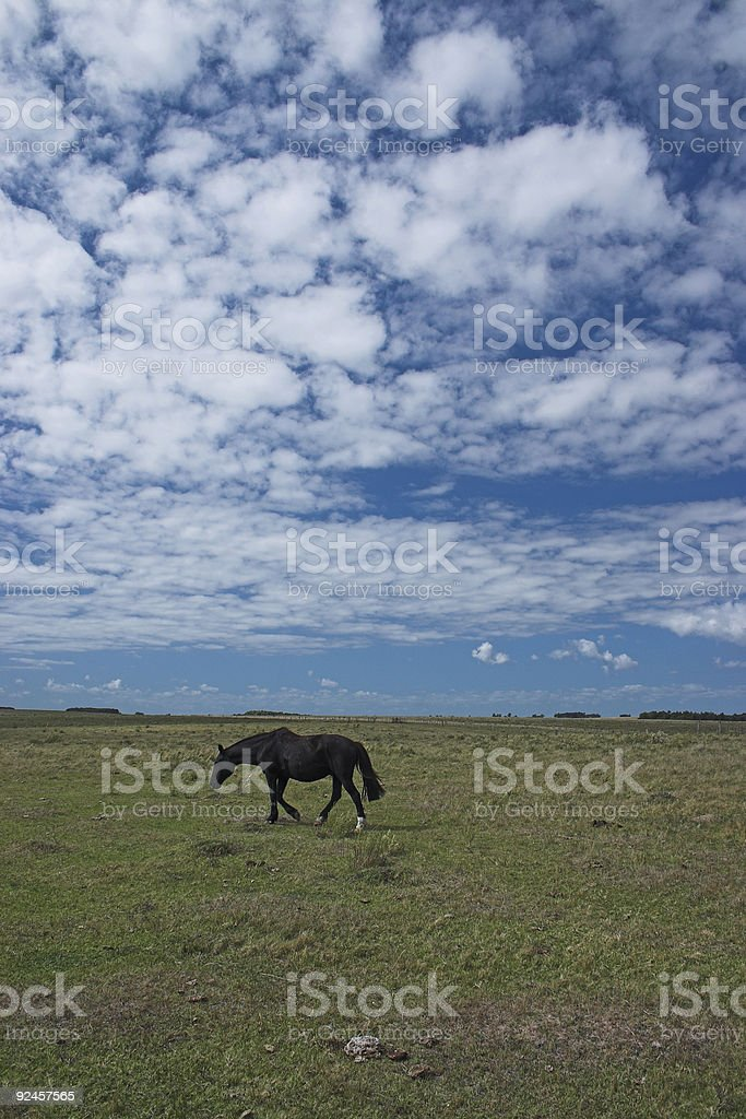 Black Lonely horse stock photo