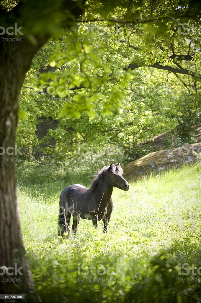 black mare is standing in the sun stock photo