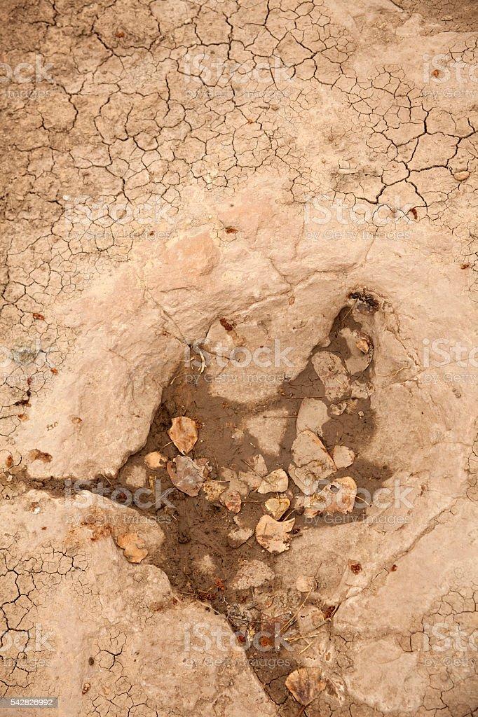 Black Mesa Jurassic theropod dinosaur riverbed tracks Oklahoma stock photo