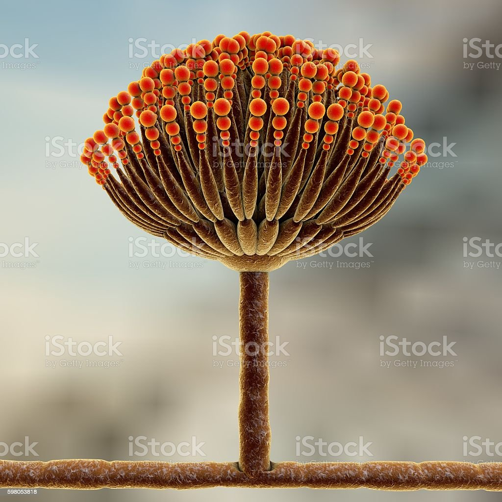 Black mold fungi stock photo