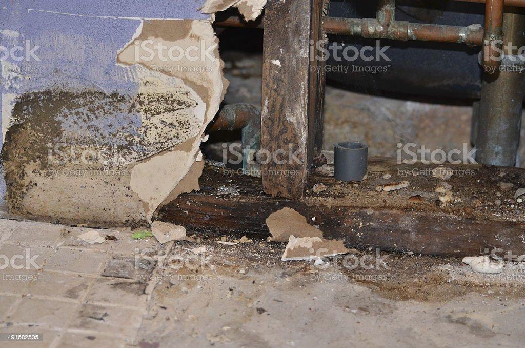 black mold stock photo