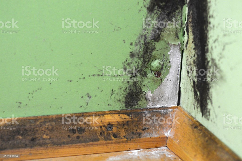 Black mould on a wet wall stock photo