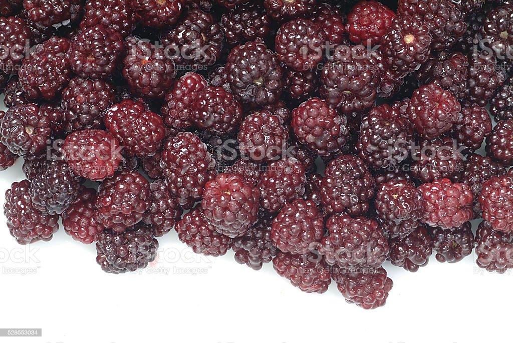 black mulberry karadut stock photo