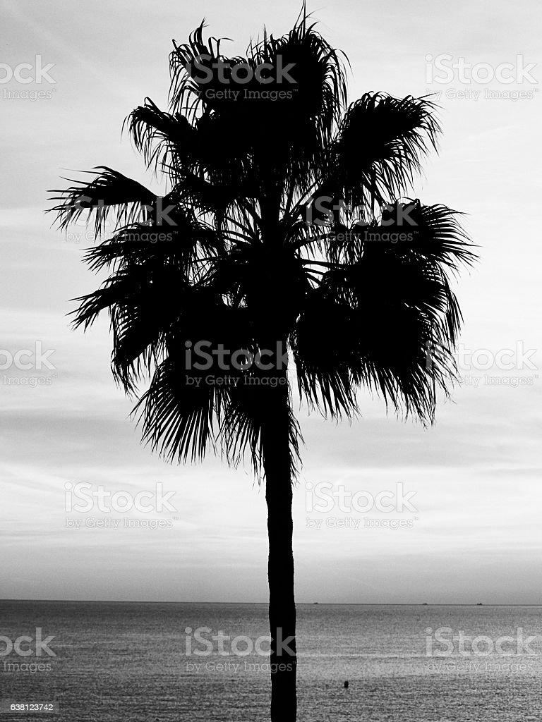 Black Palm Tree stock photo