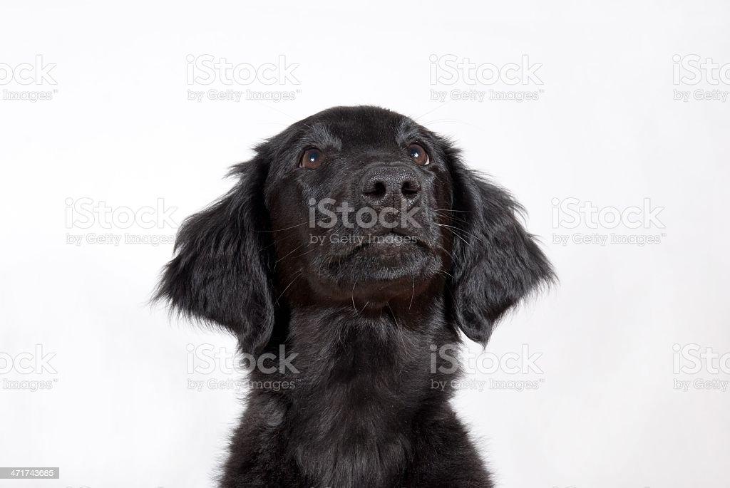 black puppy stock photo