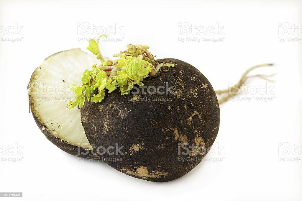 Black Radish royalty-free stock photo
