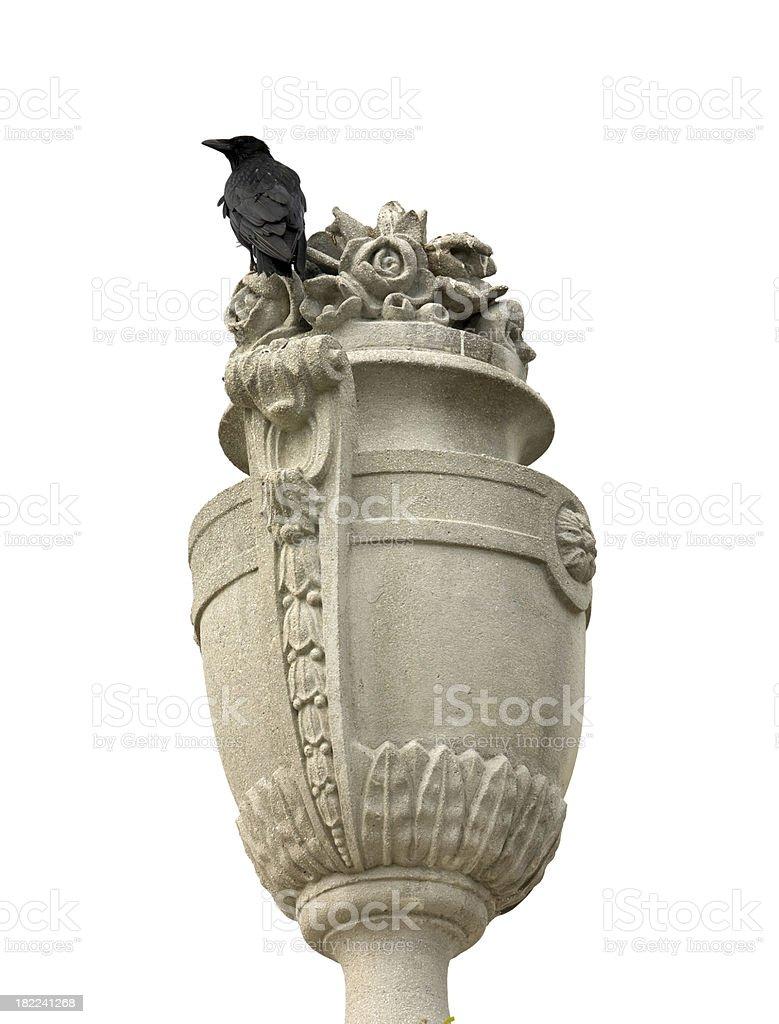 'black raven, crow' stock photo