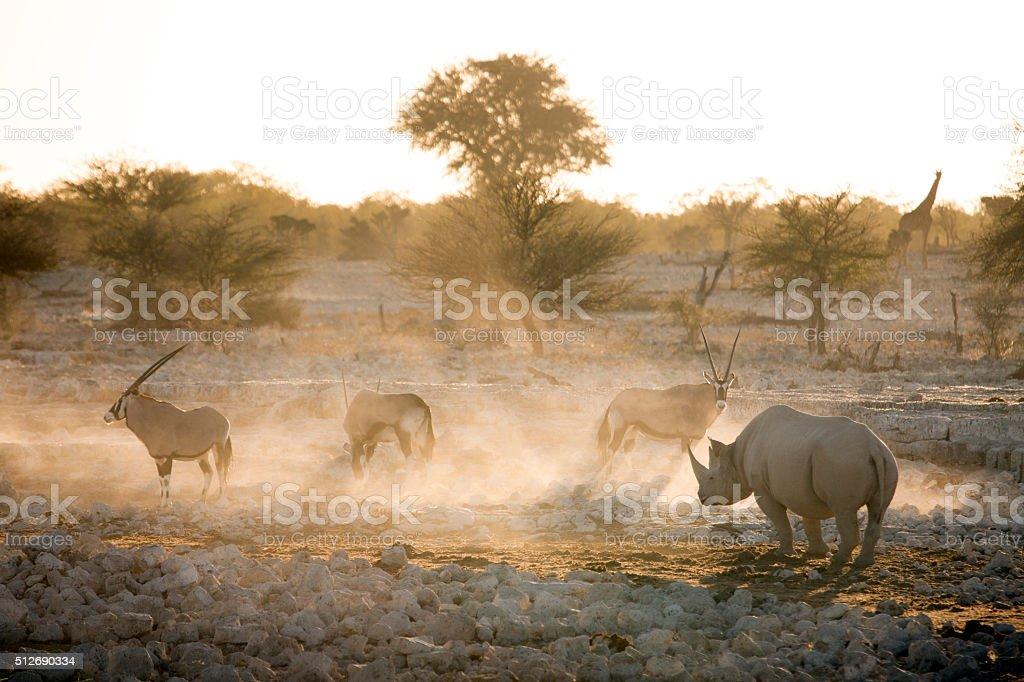 Black Rhino and Gemsbok stock photo