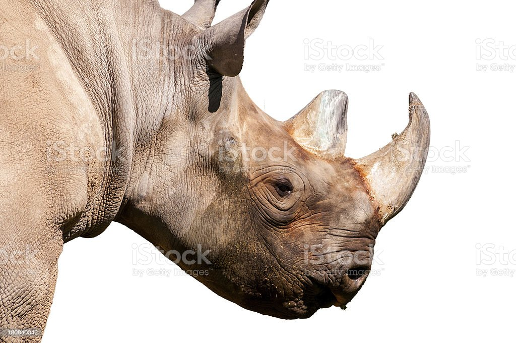 Black Rhinoceros on White with Clipping Path royalty-free stock photo