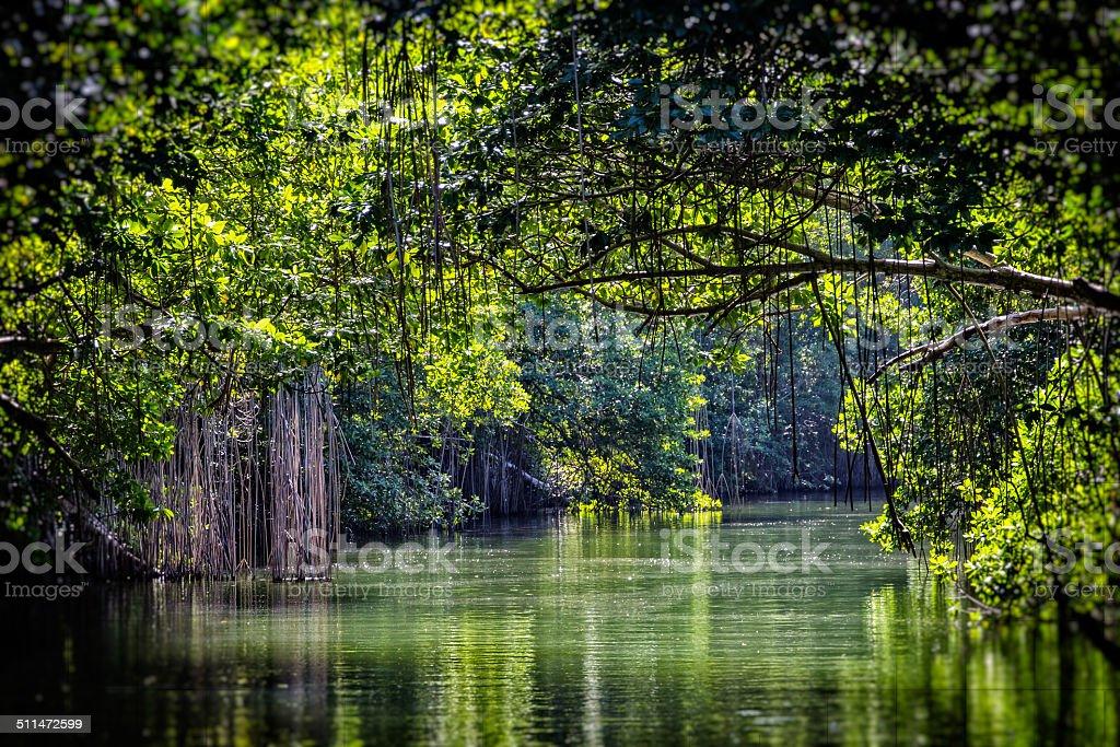 Black River Canopy stock photo
