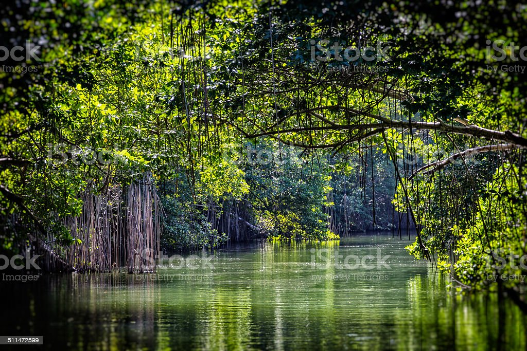 Black River Canopy stock photo