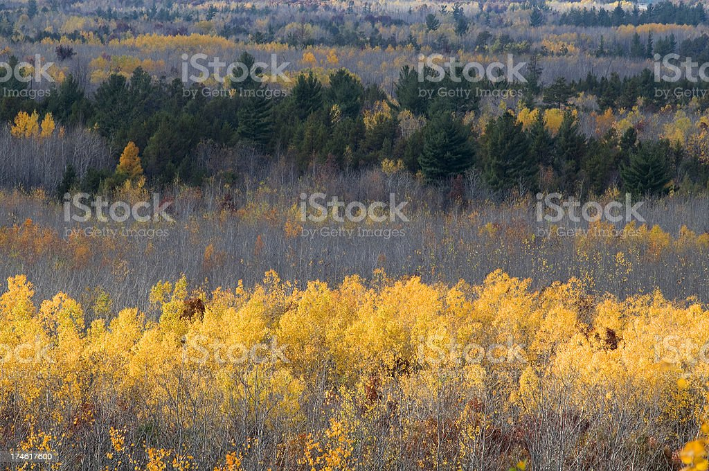 Black River State Forest, Wisconsin stock photo