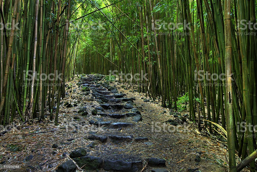 A black rock lined pathway through a dense forest stock photo