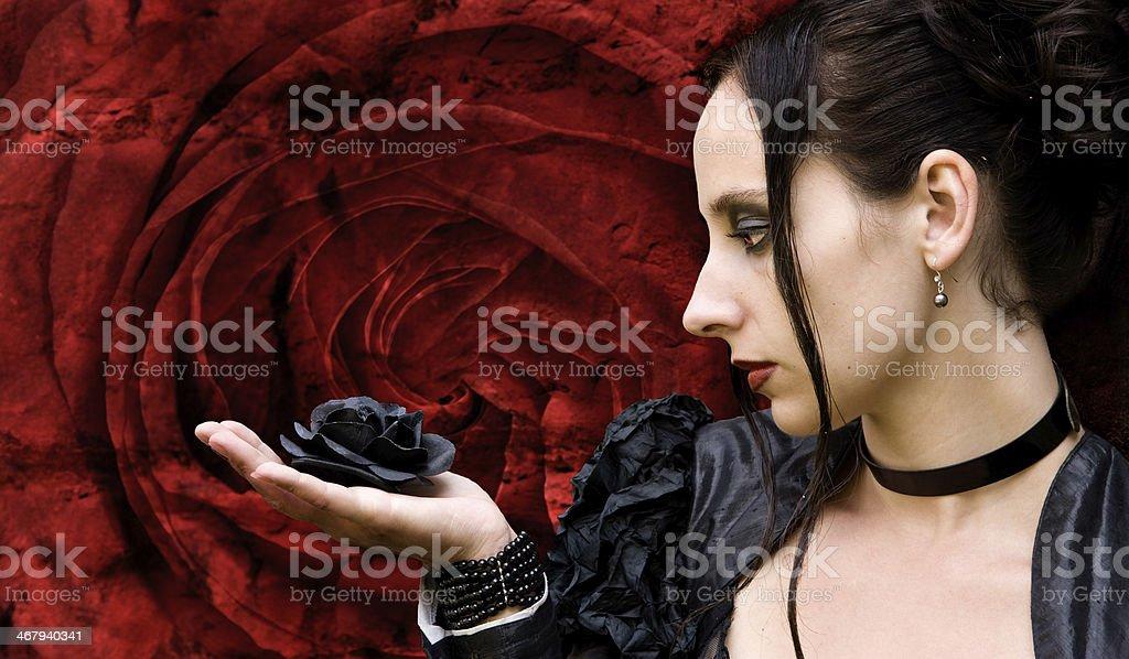 black Rose stock photo
