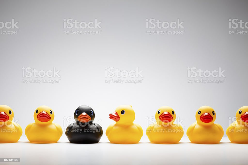 Black rubber duck in a row of yellow rubber ducks stock photo