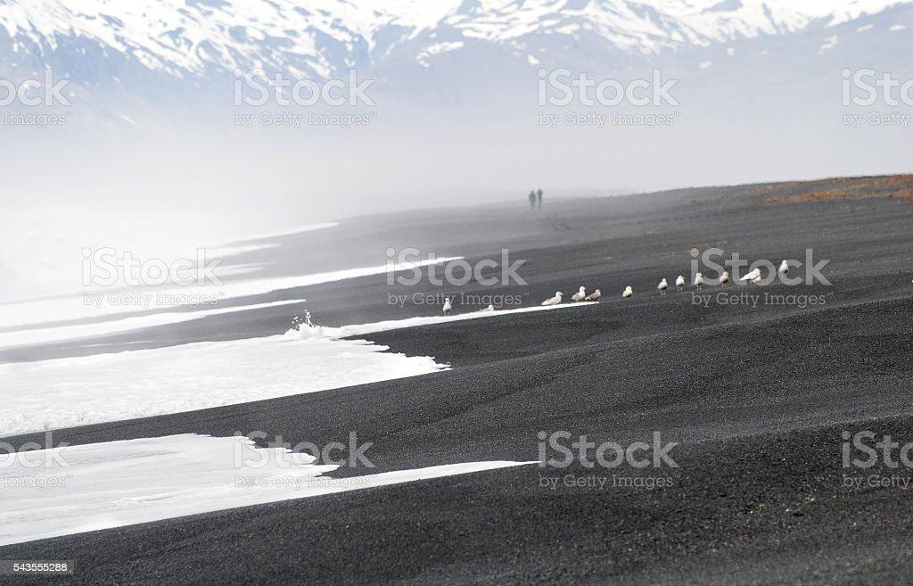 Black sand Beach Iceland stock photo