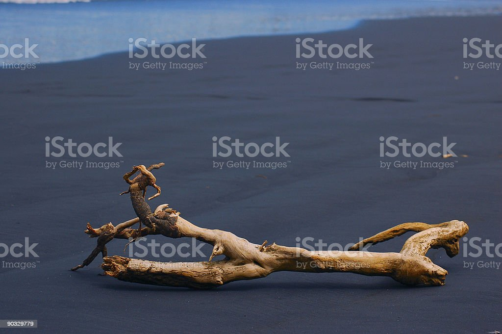 Black Sand / Driftwood royalty-free stock photo