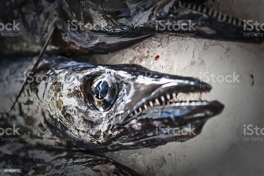 Black scabbard fish , aphanopus carbo lowe, Madeira stock photo