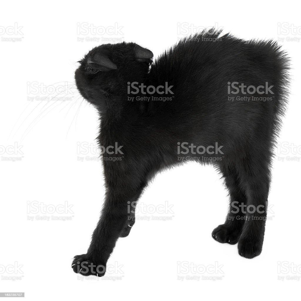 Black Scared Kitten royalty-free stock photo