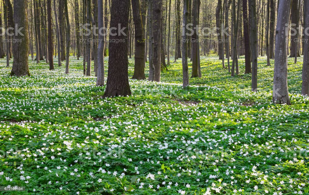 Black shadows lied on green grass and white flowers on lawn with hills. stock photo