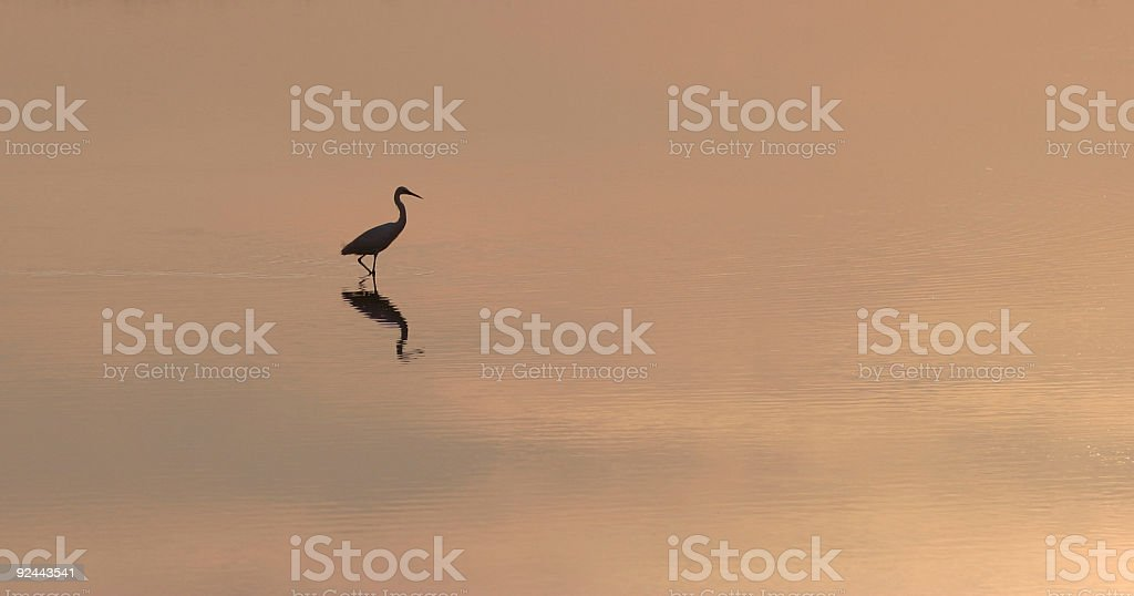 Black silhouette of a heron royalty-free stock photo