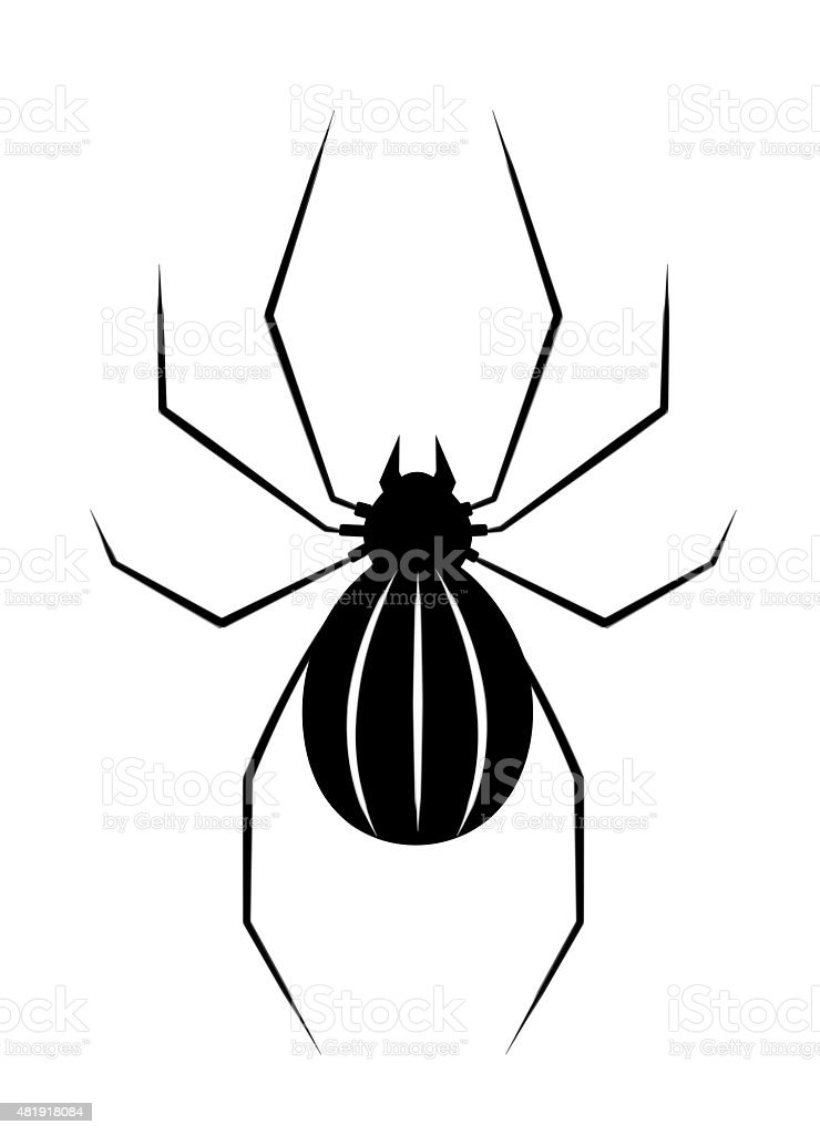 Black spider isolate stock photo