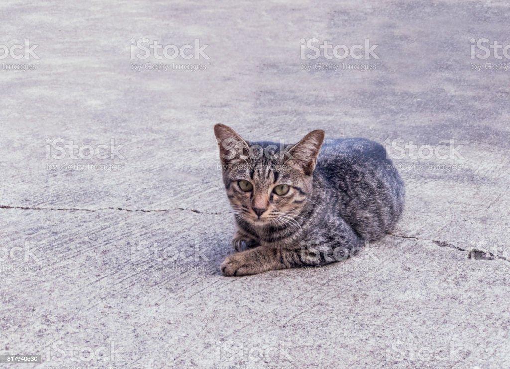 Black Stray cats on concrete floor stock photo