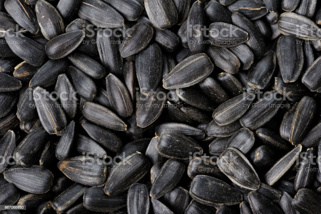 Black sunflower seeds stock photo