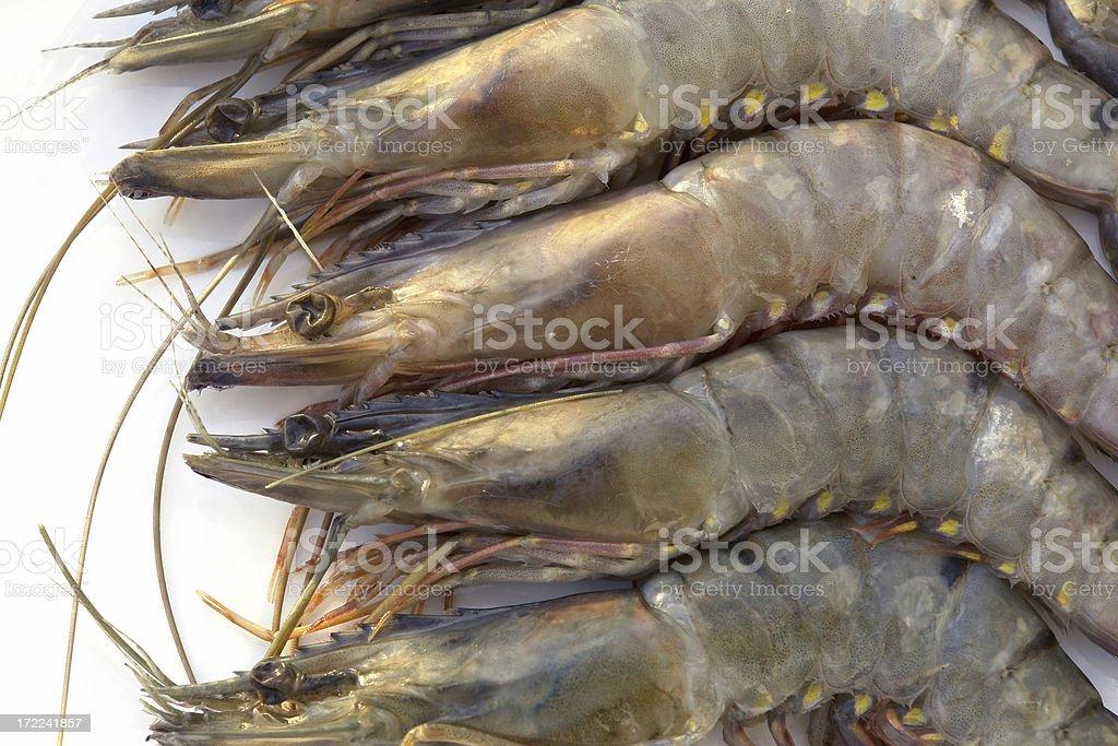 Black Tiger Shrimps stock photo