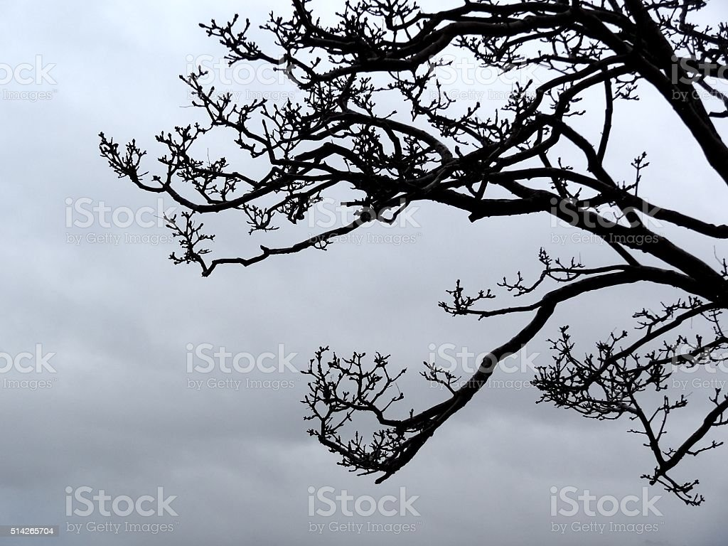 Black tree branch silhouette against overcast sky background stock photo
