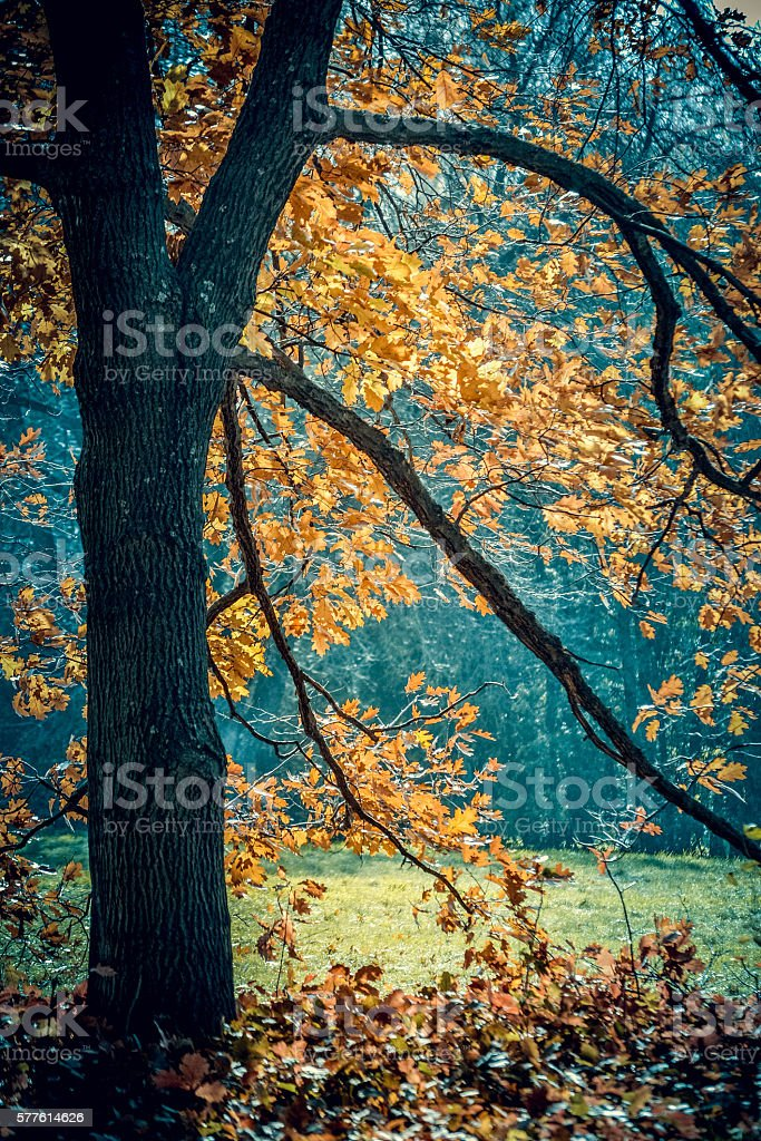 black tree trunk and branches autumn orange leaves stock photo