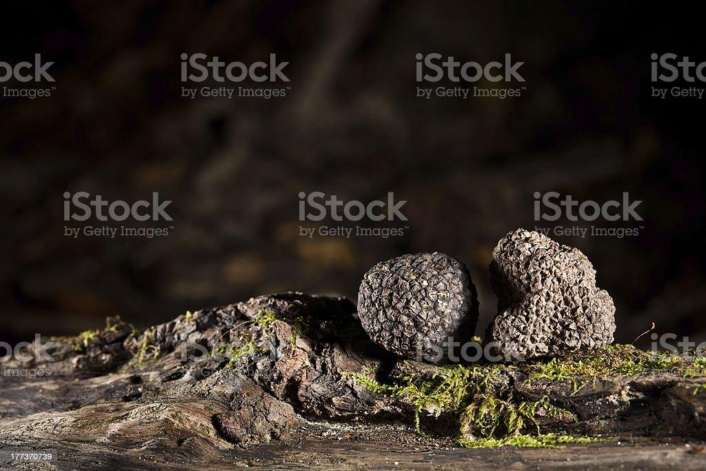 Black truffles stock photo