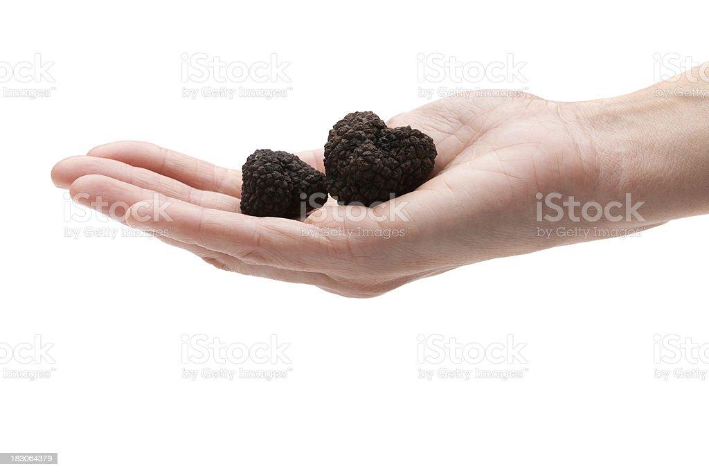 Black truffles (Tuber Aestivum) royalty-free stock photo