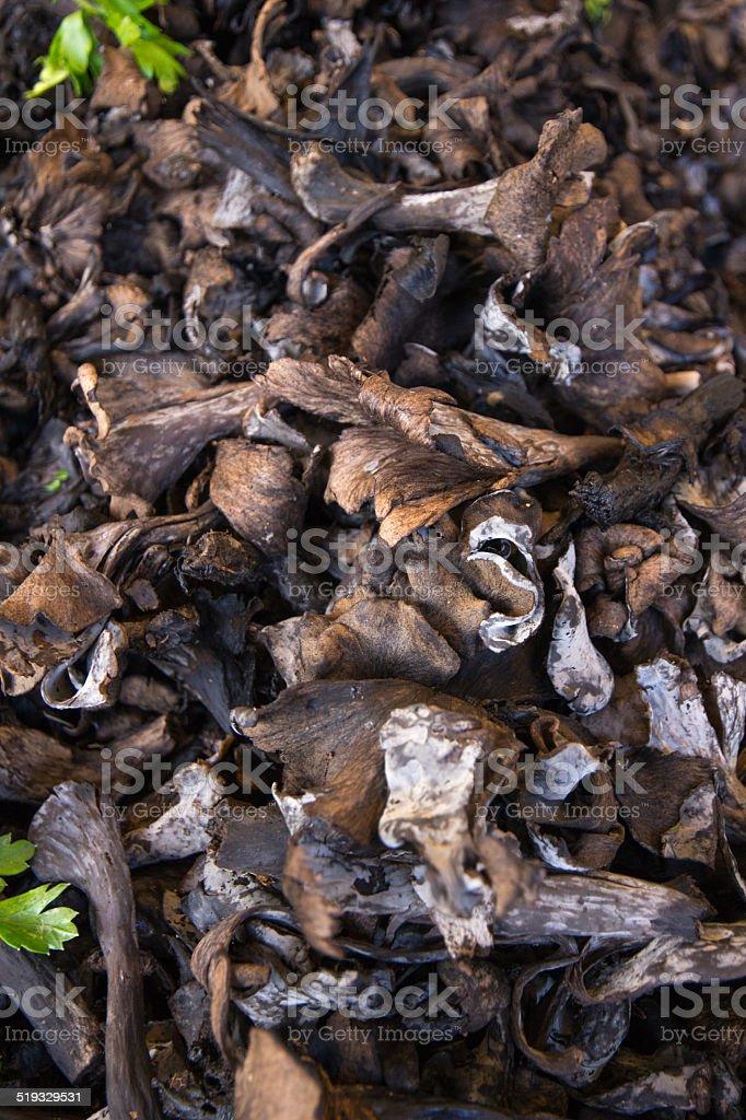 Black Trumpet Mushroom stock photo